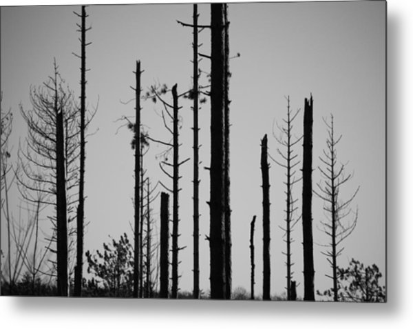 Black And White Forest 1 Metal Print