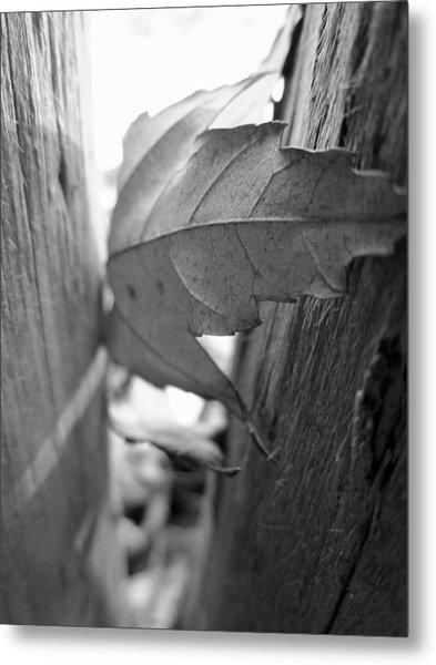 Black And White Leaf At Fort Watauga Metal Print