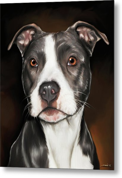 Black And White Pit Bull Terrier Metal Print