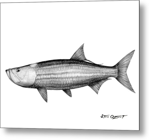 Metal Print featuring the drawing Black And White Tarpon by Steve Ozment