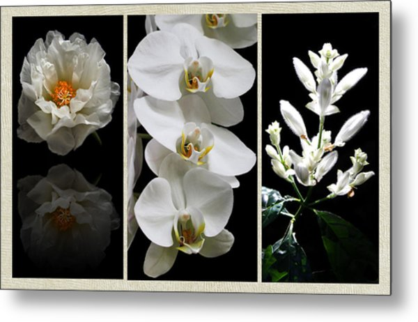 Black And White Triptych Metal Print