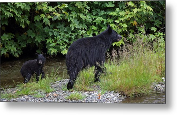 Black Bear And Cub Metal Print
