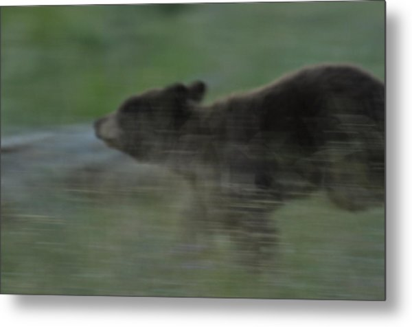 Black Bear Cub Metal Print