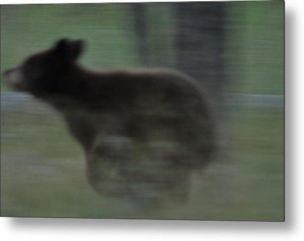 Black Bear Cub Running Metal Print