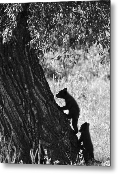Black Bear Cubs Climbing A Tree Metal Print