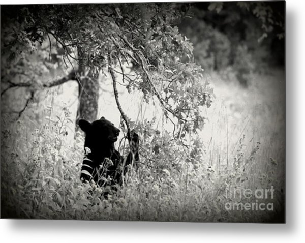 Black Bear Sitting Metal Print