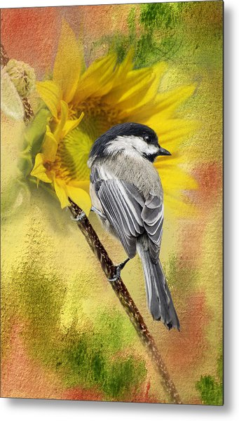 Black Capped Chickadee Checking Out The Sunflowers Metal Print