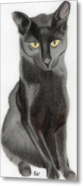 Black Cat Metal Print by Bav Patel