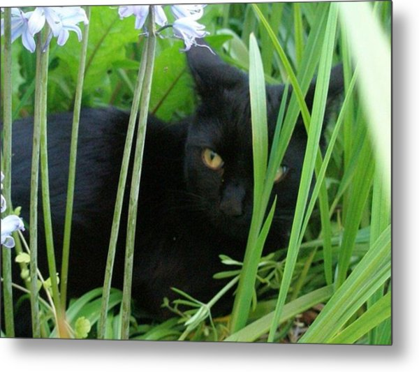 Black Cat In Long Grass Metal Print