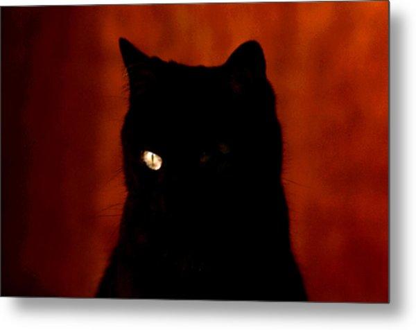 Black Cat - Yellow Eye Metal Print by Robert  Rodvik