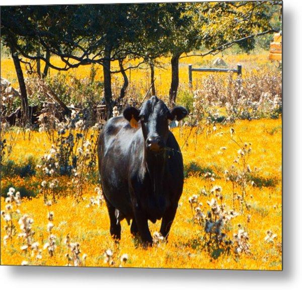 Black Cow And Field Flowers Metal Print