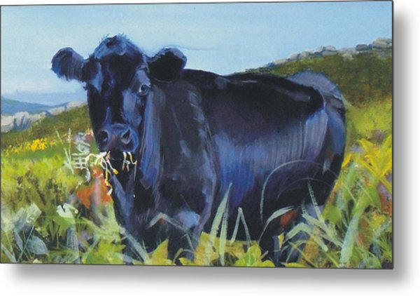 Cows Dartmoor Metal Print