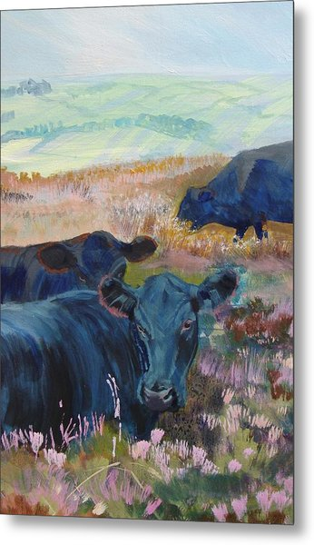 Black Cows On Dartmoor Metal Print