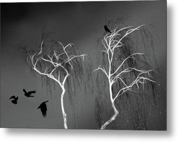 Black Crows - White Trees  Metal Print