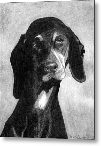 Black Forest Hound Dog Portrait  Metal Print by Olde Time  Mercantile