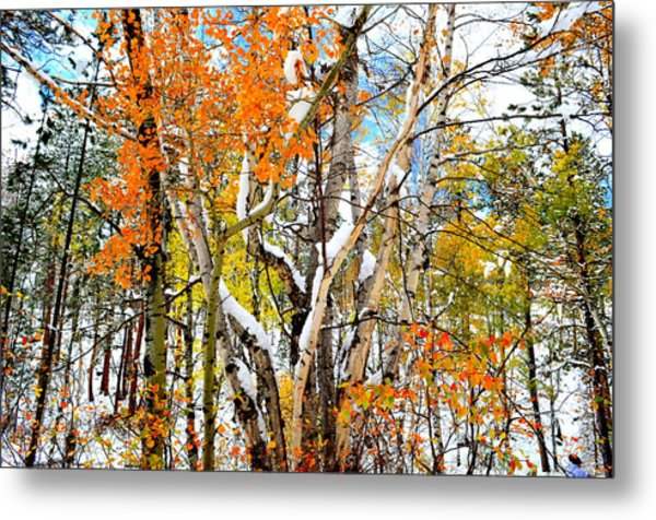 Black Hills Entanglement Metal Print