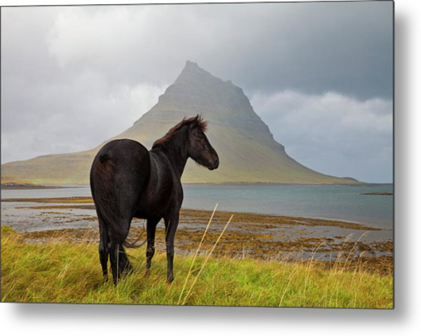 Black Horse In Iceland Metal Print by Horstgerlach
