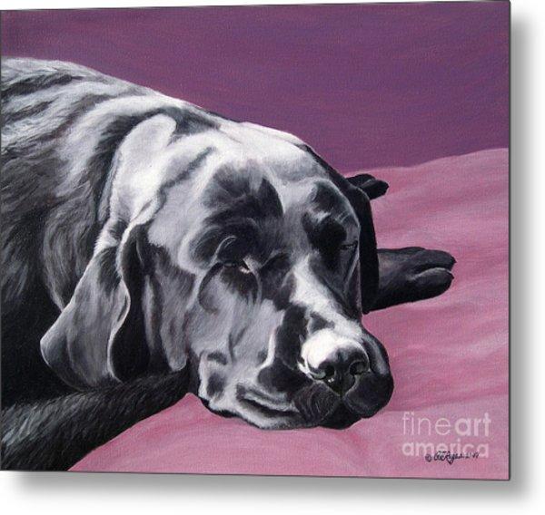 Black Labrador Beauty Sleep Metal Print
