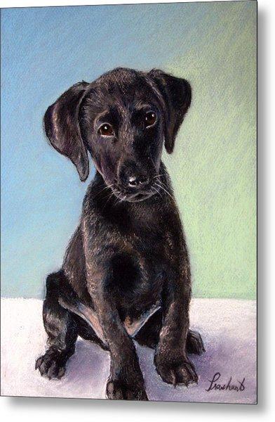 Black Labrador Puppy Metal Print by Prashant Shah