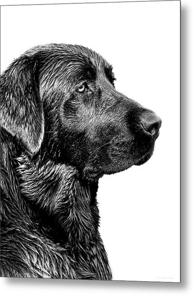 Black Labrador Retriever Dog Monochrome Metal Print