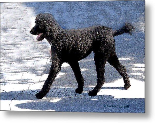 Black Poodle Metal Print