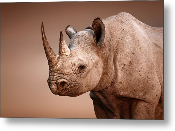 Black Rhinoceros Portrait Metal Print