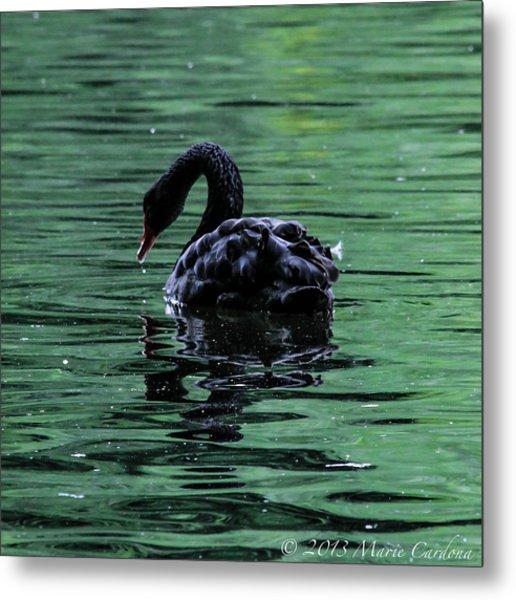 Black Swan I Metal Print by Marie  Cardona