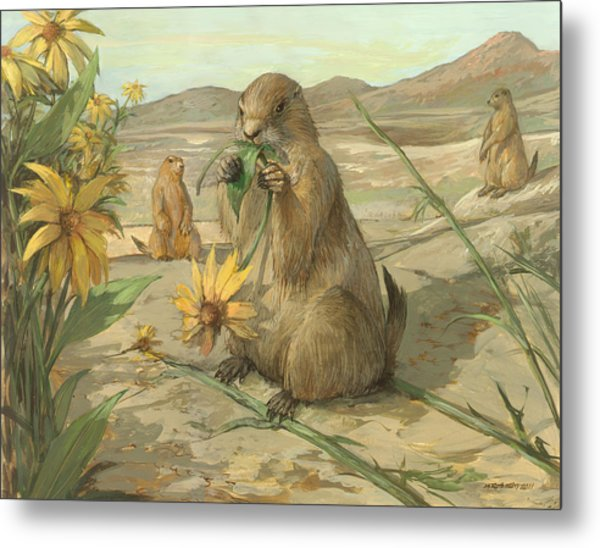Black-tailed Prairie Dogs Metal Print by ACE Coinage painting by Michael Rothman