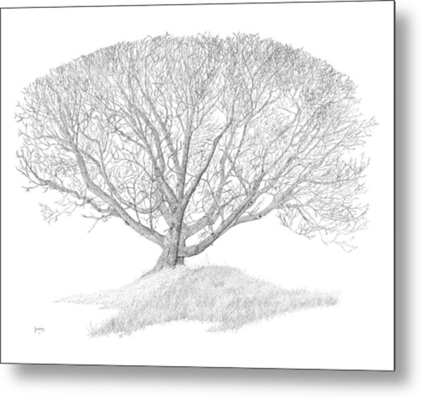 Black Walnut Metal Print