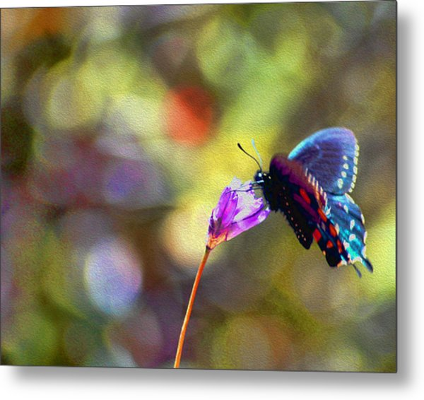 Metal Print featuring the photograph Black Willowtail Butterfly by William Havle