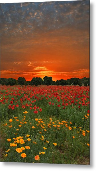 Blaze Of Glory Metal Print