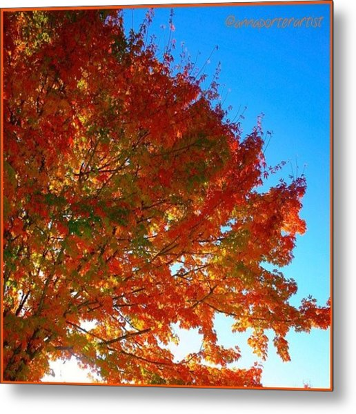 Blazing Orange Maple Tree Metal Print