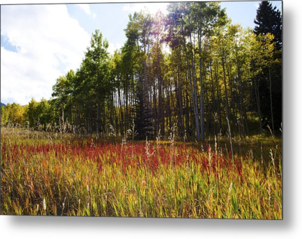 Blazing Red Grass In Colorado Metal Print
