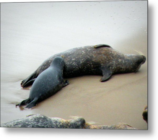 Bliss Metal Print by Andrea Cullinane
