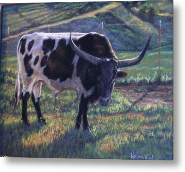 Blk And White Longhorn Steer Metal Print