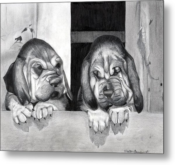 Bloodhound Puppies Dog Portrait  Metal Print by Olde Time  Mercantile