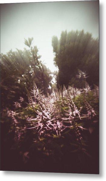 Blooming Rays  Metal Print