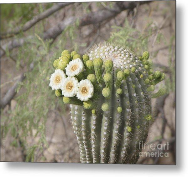 Blooming Saguaro Metal Print