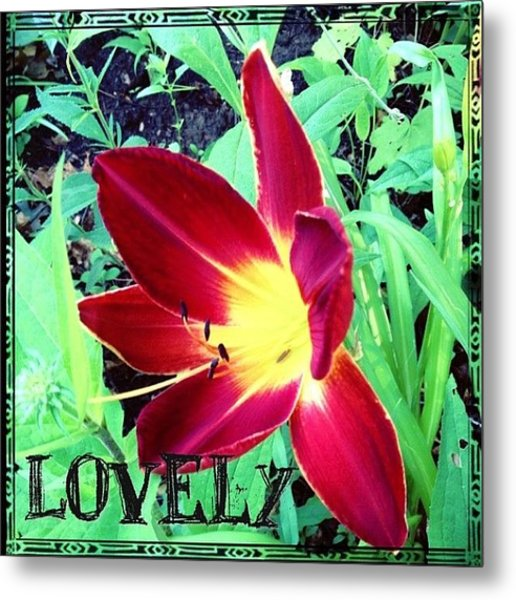 #blooming This Morning. A #lovely #lily Metal Print
