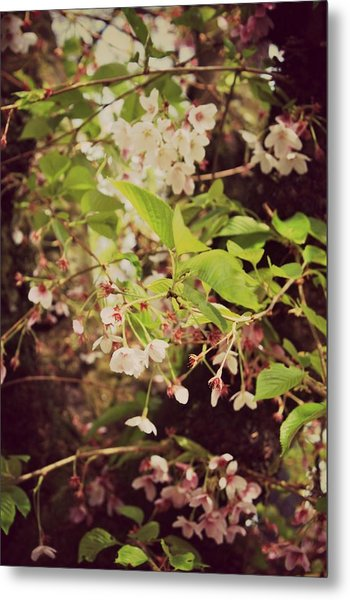 Blooms In The Branches Metal Print by Cathie Tyler