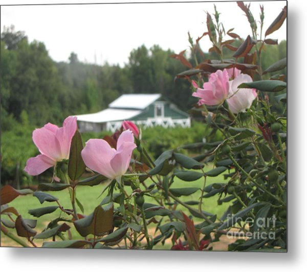 Blooms With The Barn Metal Print by Gayle Melges