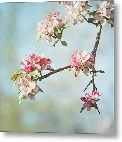 Blossom Branch Metal Print