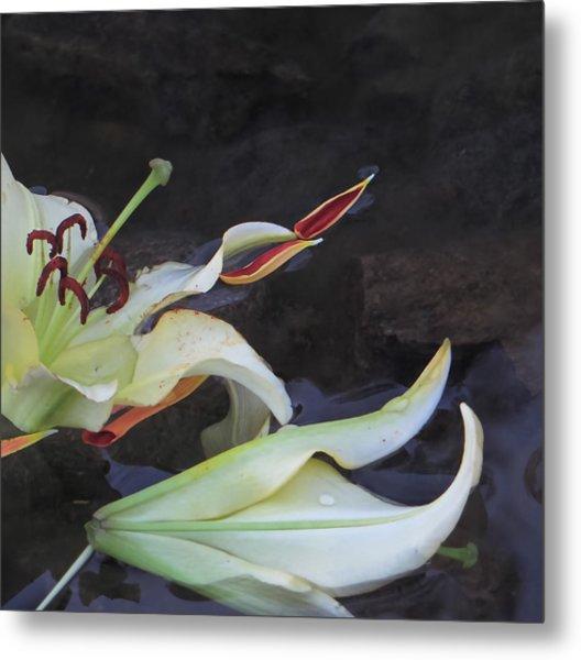 Blossom Rain 16 Metal Print by Georg Kickinger