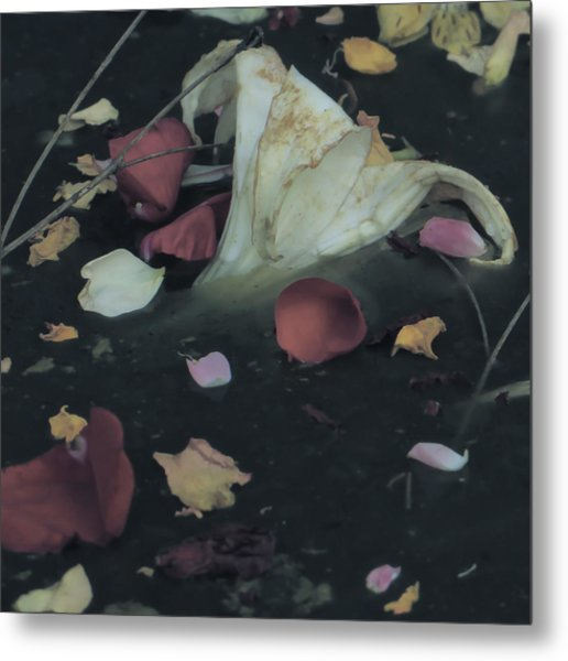 Blossom Rain 32 Metal Print by Georg Kickinger