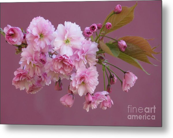 Blossom Standouts Metal Print by Frank Townsley