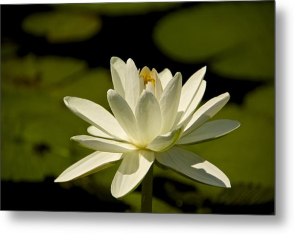 Blossoming Metal Print by Kathi Isserman