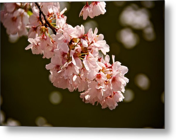 Blossoms And Petals Metal Print by Kathi Isserman