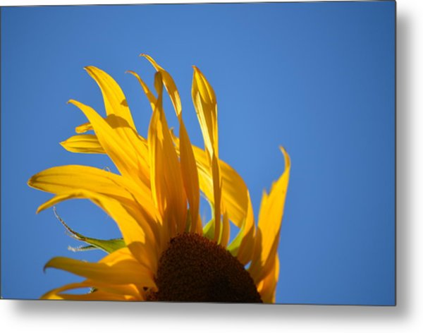 Blow Back Metal Print