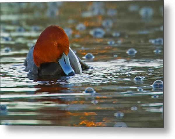 Blowing Bubbles Metal Print