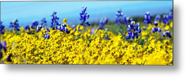 Blue And Yellow Wildflowers Metal Print